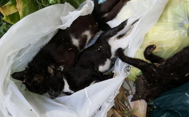 Denuncian el envenenamiento de una docena de gatos en Las Arenas