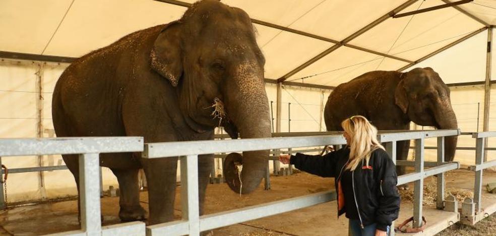 Protestas por la presencia de Elefantes y tigres en el circo