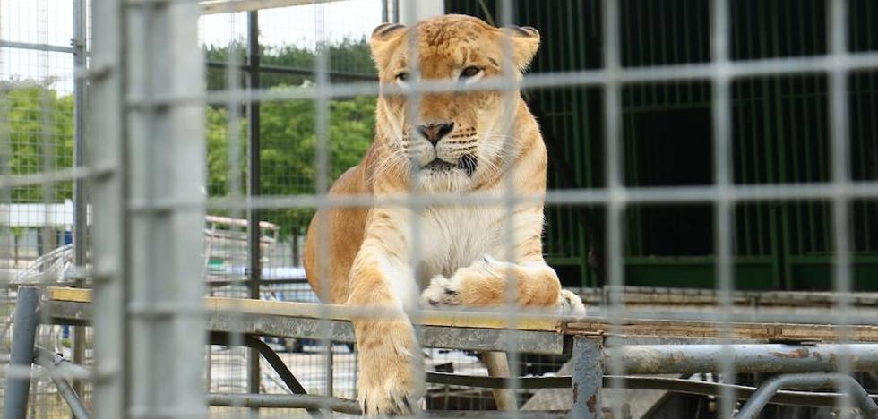 Irabazi y Podemos pedirán que el Ayuntamiento no contrate circos que utilicen animales en otras ciudades