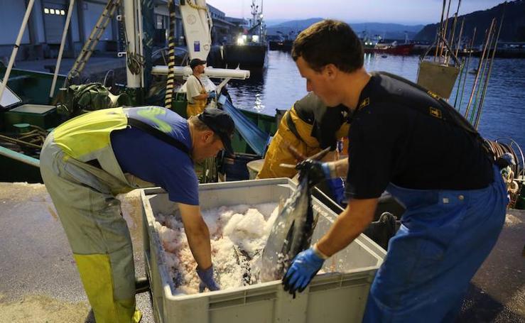 Superadas las 1.500 toneladas de bonito del norte descargadas en los puertos vascos