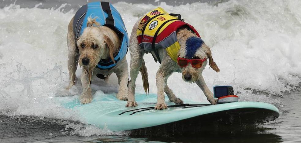 Aquellos surfistas... ¡son perros!
