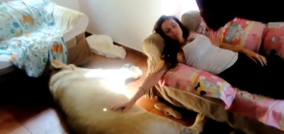 Una pareja de Olot tiene como mascota a un león de 250 kilos