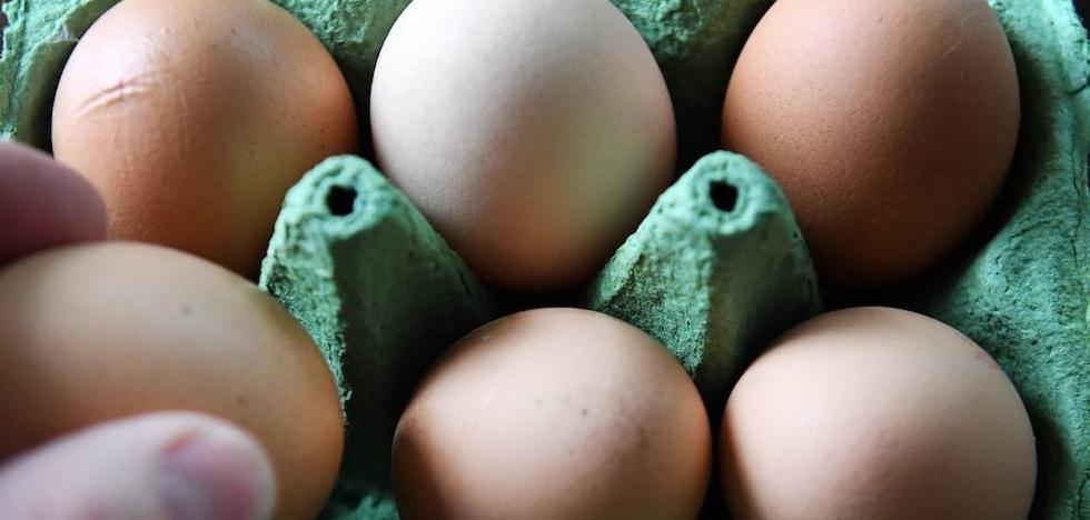 Inmovilizadas en Bizkaia 20 toneladas de huevo líquido contaminado