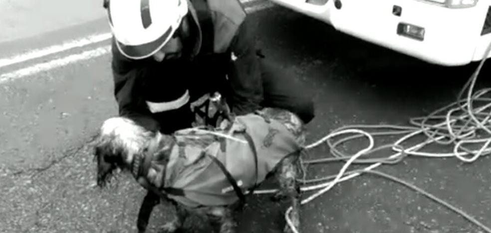 Rápel de los Bomberos para rescatar a un perro en una mina de Abanto