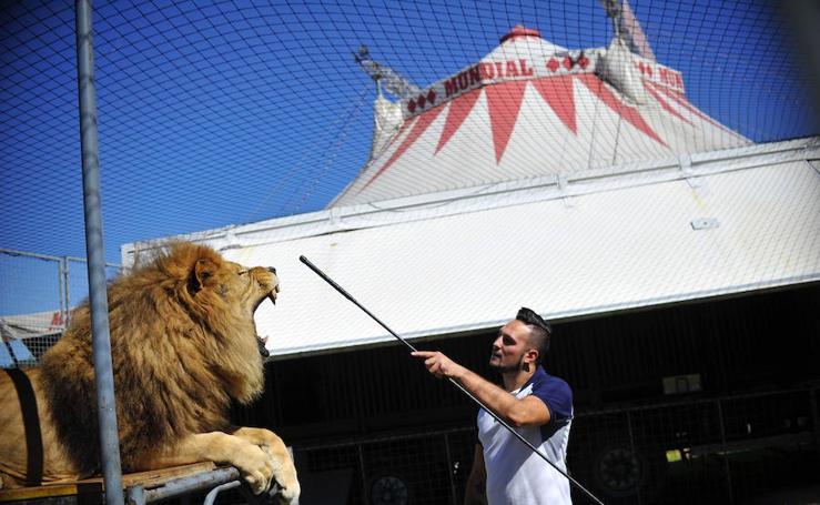 Las entrañas del Circo Mundial