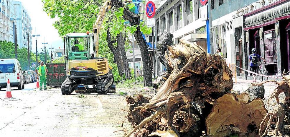 Retiran 22 árboles de la Avenida Gasteiz por una obra