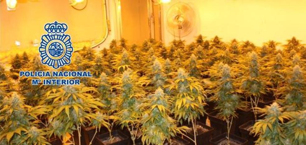Detenido por usar el piso de un banco para cultivar 120 plantas de marihuana en Granada