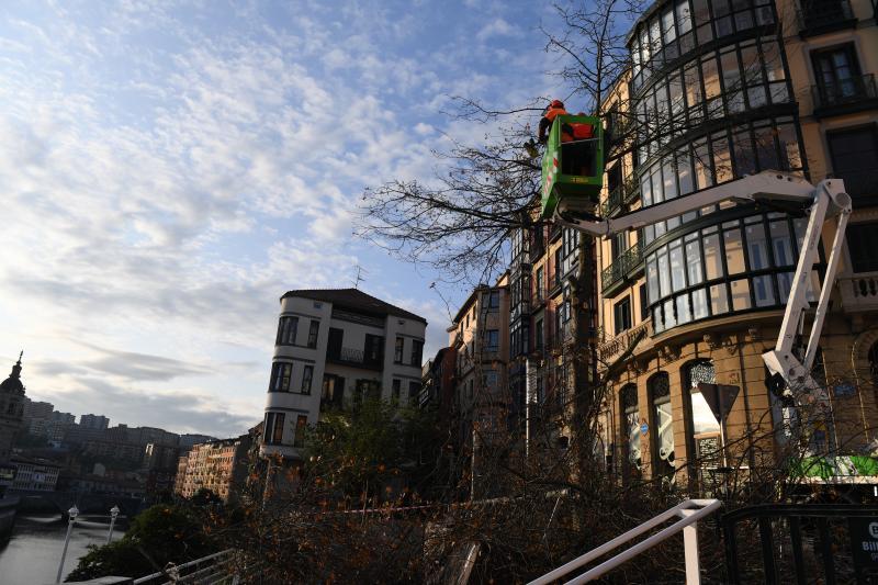 Talan un roble en el muelle Marzana por un 'alto riesgo' de caída de ramas