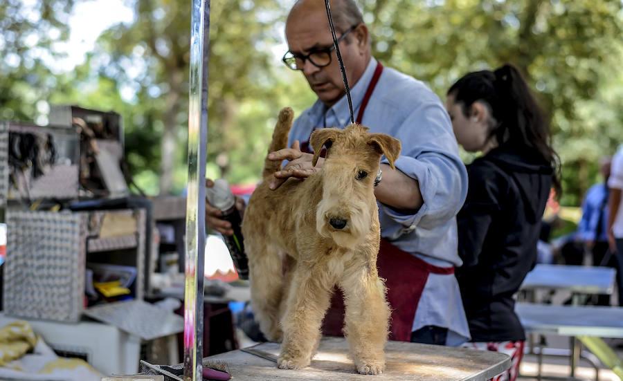 Muskiz busca el cachorro más bello
