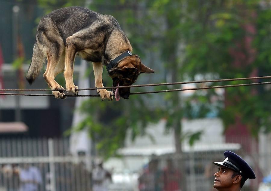 Demostración canina en Sri Lanka