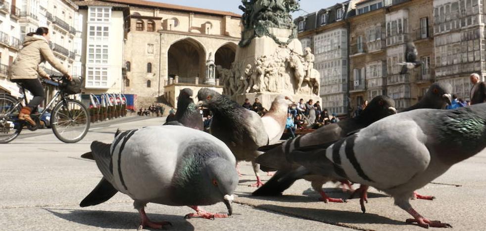 El Ayuntamiento de Vitoria analiza cómo erradicar el problema de heces de palomas en los colegios