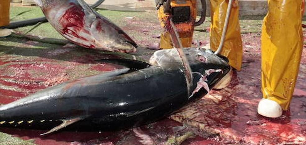 La investigación por la intoxicación de atún que afectó a dos vascos revela graves irregularidades en la empresa