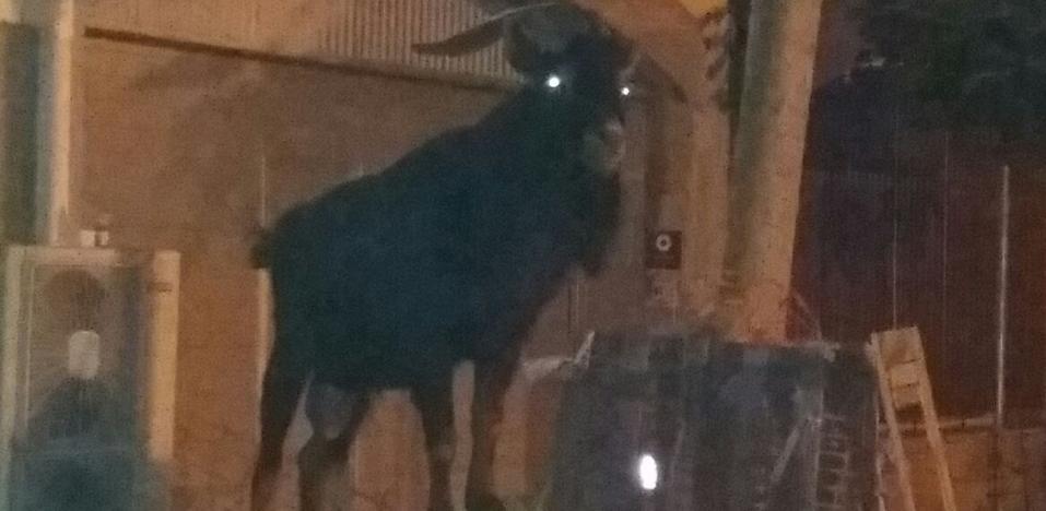 Un singular 'paciente' aparece de madrugada en el hospital de Santa Marina de Bilbao