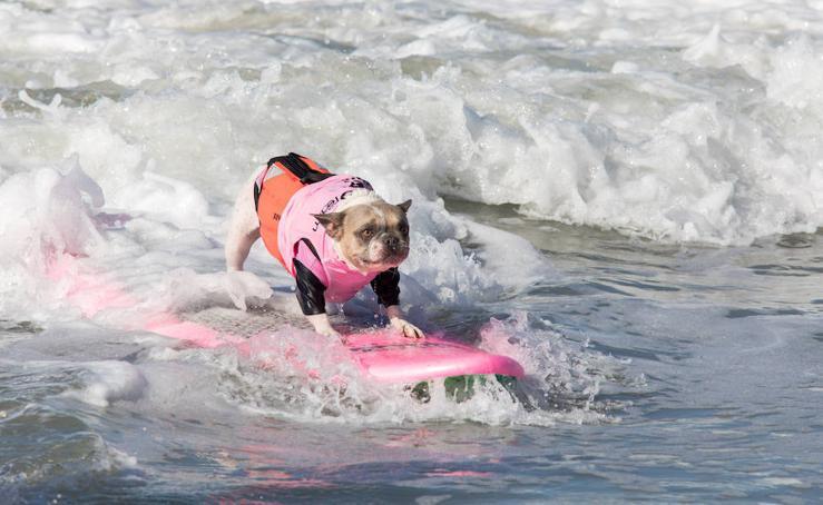 Los surferos más perros