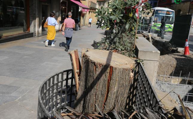 La tala de una decena de árboles en el centro de Algorta solivianta a los vecinos