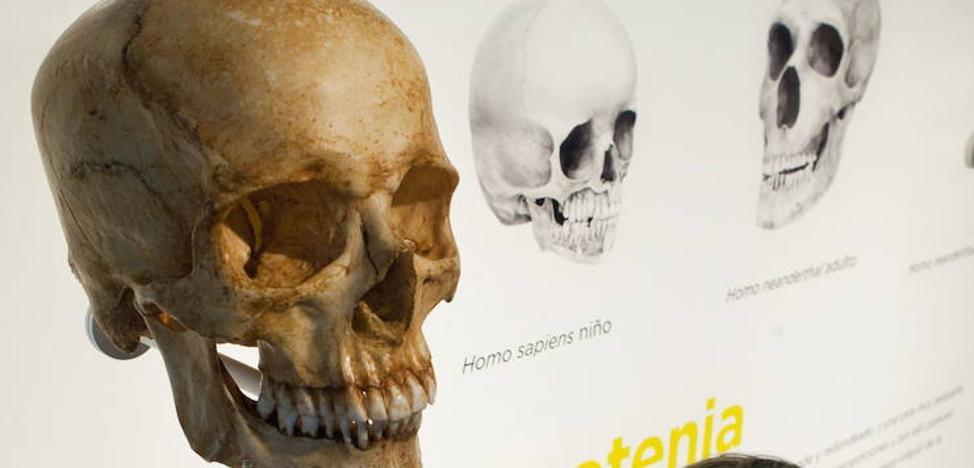 Nuevas evidencias sobre origen de 'Homo sapiens' indican que no existen razas