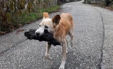 La verdadera historia de la perra de Galicia y su cachorro carbonizado