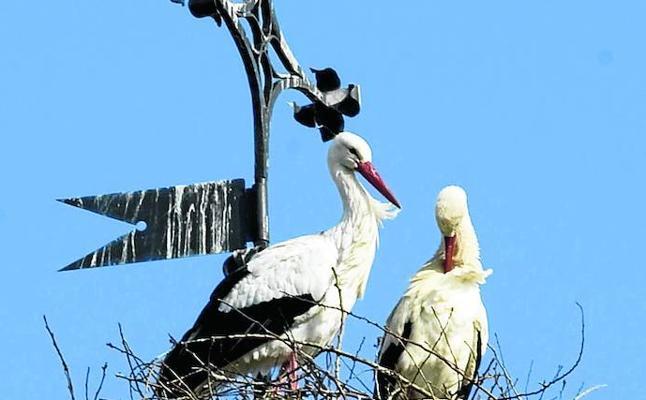 Los nuevos hábitos de las aves por el cambio climático