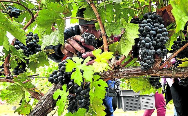El 'Big Data' llega al Rioja: mejor vino con menos recursos