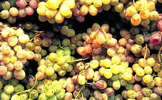 De temporada, uva