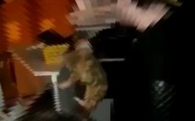 La Guardia Civil investiga un vídeo en el que un menor lanza a un gato desde un segundo piso en Málaga