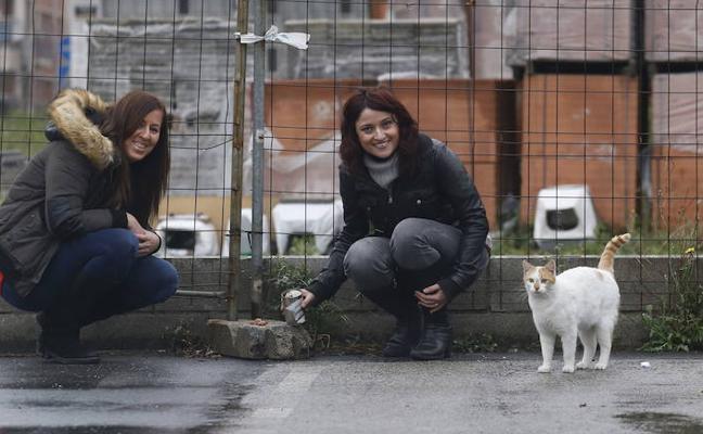 Extienden el plan de colonias felinas de Extebarri a la calle Arbolantxa al crecer el número de gatos