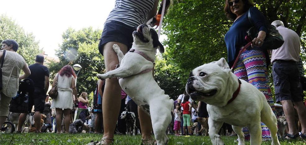 Kudukoa insta a mejorar la convivencia entre los perros y vecinos en Durango
