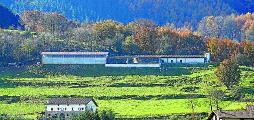 Investigan la muerte de 45 vacas en una granja Gipuzkoa por falta de alimento