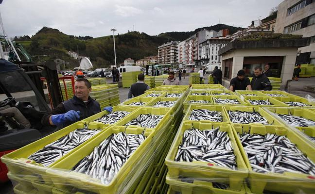 Azti tratará de evaluar los efectos del cambio climático en cuatro pesquerías