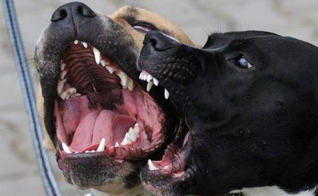 Muere una mujer de 40 años por el ataque de su perro en La Palma