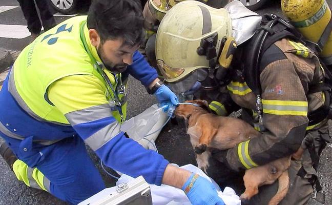Los bomberos salvan la vida a un perro que se asfixiaba en un incendio en Barakaldo