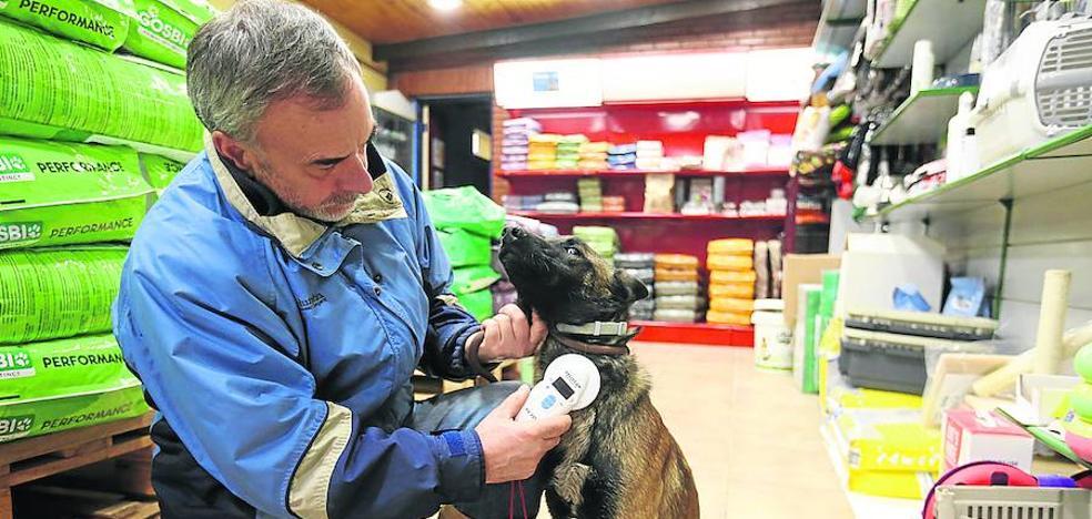 Leioa dará gratis en adopción a los perros de razas consideradas peligrosas