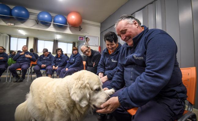 Talleres Gallarreta introduce la terapia con animales y una nueva sala multisensorial
