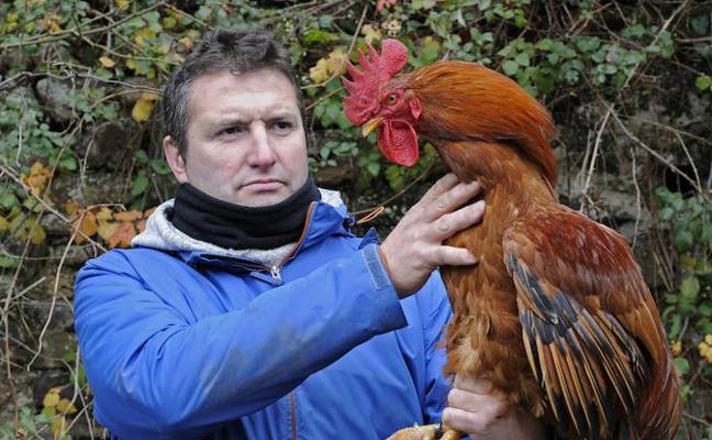 «A las gallinas es importante mantenerlas felices»