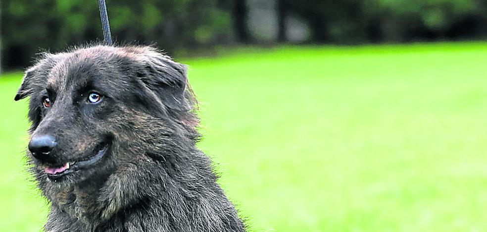 Barrika contará con un servicio de perrera municipal desde 2018