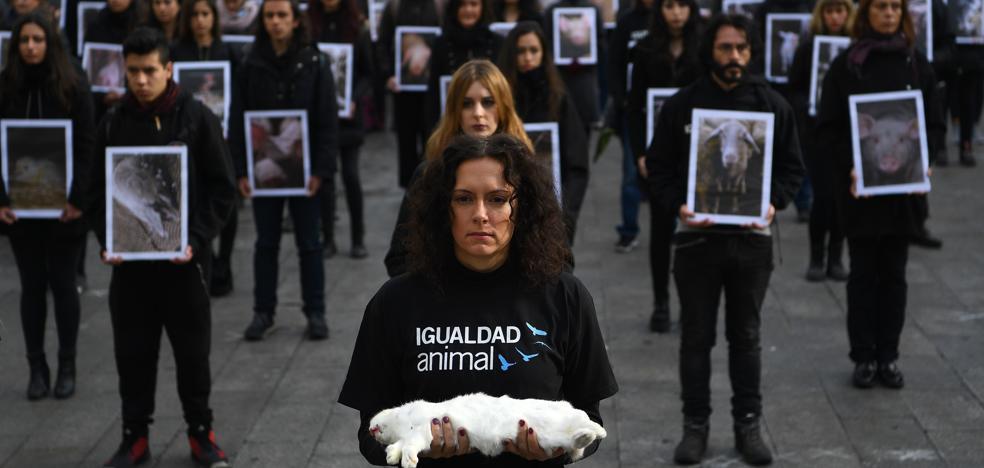 El maltrato animal ya no queda impune