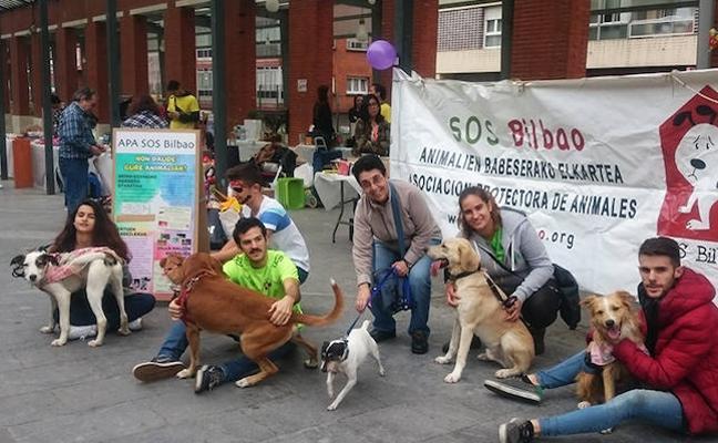 Una protectora de Bilbao acerca a Basauri la situación de los animales abandonados
