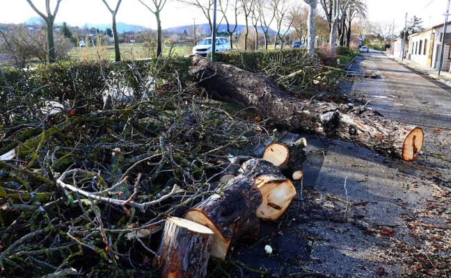 Obras y Servicios retira hasta 26 árboles derribados por la tormenta Ana