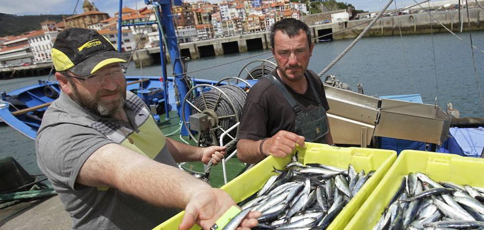 España logra suavizar el drástico recorte de merluza para 2018