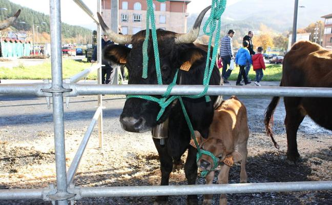 La feria de Santa Lucía premia en Orozko al mejor ganado terreño