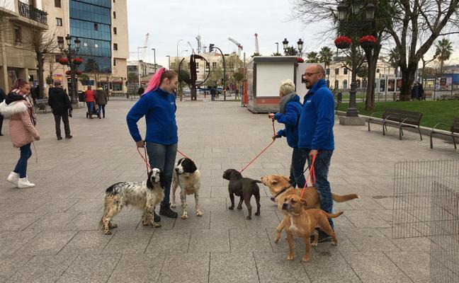 Ibi, Spok y Nina buscan un nuevo hogar