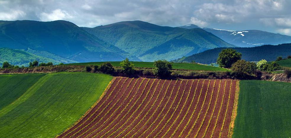 Rioja Alta: ruta por los orígenes del castellano y el euskera