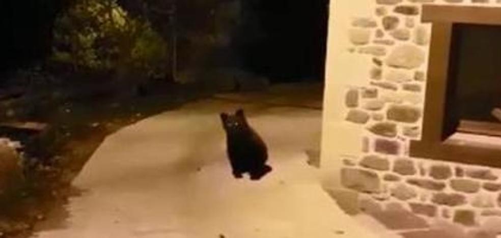 Un ejemplar grande, una cría... Los osos se acercan a pueblos cántabros en busca de comida