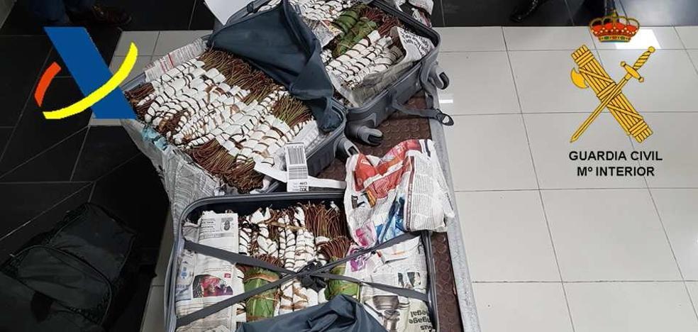 Aprehenden en el aeropuerto de Hondarribia 30 kilos de khat, considerada la 'cocaína africana'