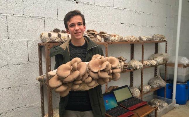 Cultivan setas a partir de los residuos del café en el centro Lauaxeta