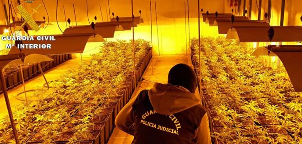La Guardia Civil halla 1.212 plantas de marihuana en una nave industrial de Vitoria