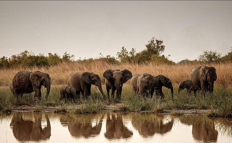 Defender la vida salvaje