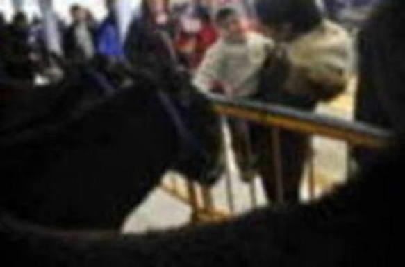 La calidad del ganado y de los productos agrícolas marcarán mañana la feria de San Blas