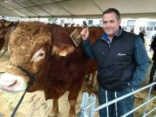 El 83% de las explotaciones de carne vacuno son de razas autóctonas en la comarca