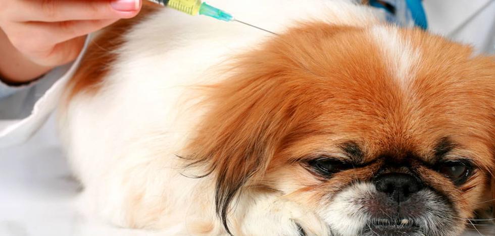 Cien euros en vacunas, 300 en comida... ¿Cuánto cuesta mantener a una mascota?